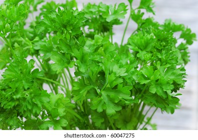 Fresh green curly parsley, shallow dof