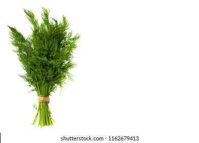 Fresh green dill isolated on the white background, studio macro image, copy space template