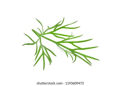Fresh green dill isolated on white background. Food ingredients