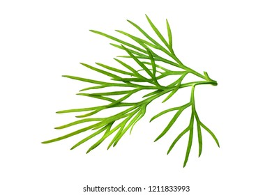 fresh green dill isolated on white background. macro