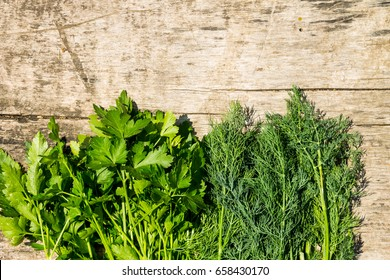Fresh green dill and parsley herbs on rustic wooden table. Top view with copy space