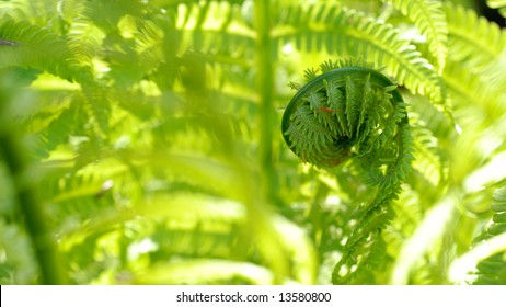 Fresh green fiddlehead surrounded by brightly lit fern fronds, with room for text.