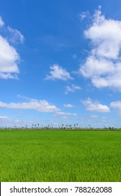 fresh green field with clear sky and a bit cloud