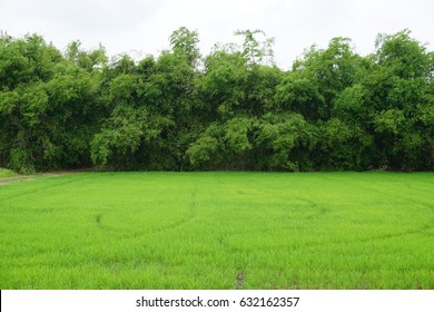 Fresh Green field with green tree