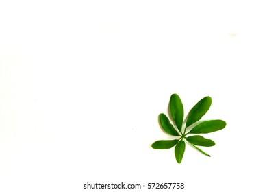 Fresh green foliage On a white background
