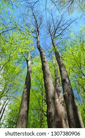 Fresh green foliage of spring forest trees, nature background