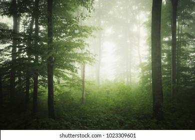 fresh green forest landscape