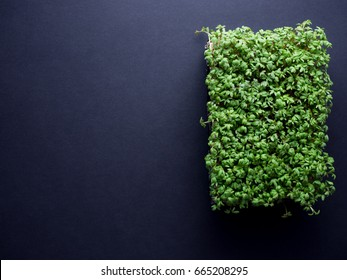 Fresh green garden cress in black plastic box isolated on black background