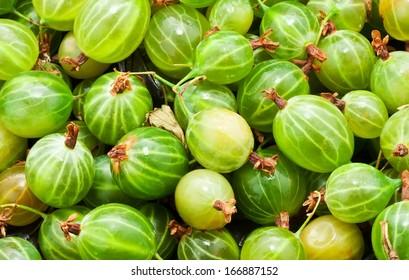 Fresh green gooseberries making full frame background