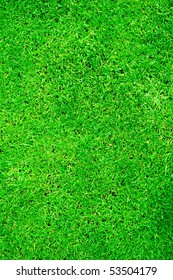 Fresh green grass background/texture