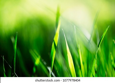 Fresh green grass backround. Vintage faded effect. Summer haze. Life and growth concept