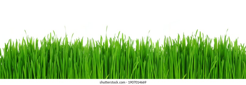 Fresh green grass. Banner border isolated on a white background.