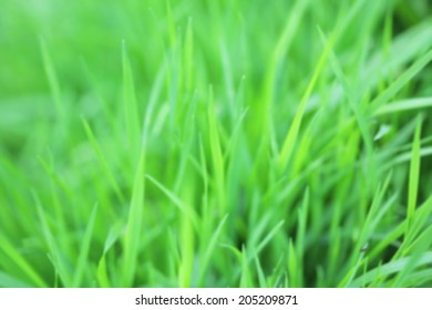 Fresh green grass colorful blurred background