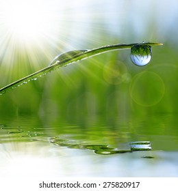 Fresh green grass with dew drop closeup. Nature Background