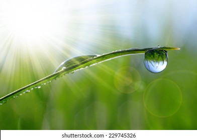 Fresh green grass with dew drops closeup. Natural background.