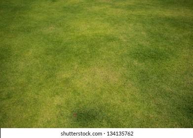 Fresh green grass field background, close up view.