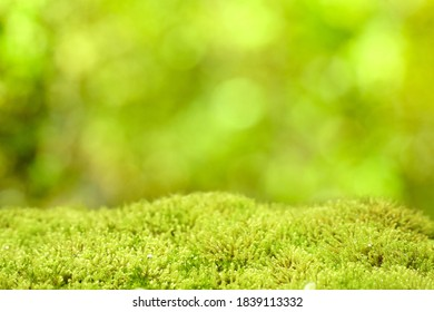 Fresh green grass or moss on blurred bokeh background in the park. Beautiful image. Copy space. Can be use for advertising to show your product display montage.
