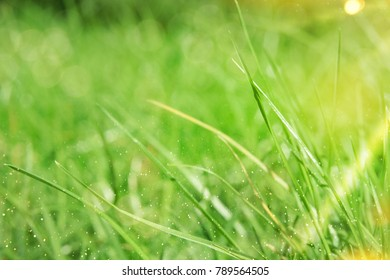 Fresh green grass. Nature background
