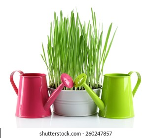 Fresh green grass in small metal bucket and decorative watering cans, isolated on white