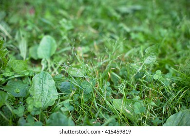 fresh green grass texture background, selective focus