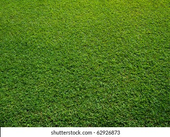 Fresh Green Grass Texture and surface