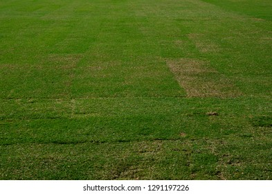 fresh green grass turf texture background