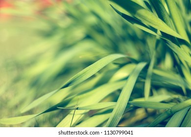 Fresh green grass with water droplet in sunshine. Shallow Dof