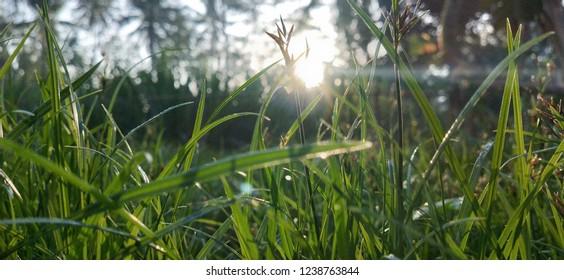 fresh green Grassroots