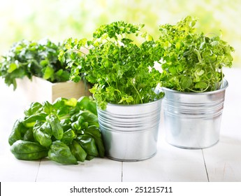 fresh green herbs in pots on wooden table