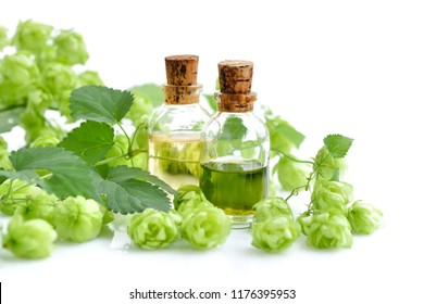 Fresh green hop branch (Humulus) with medicinal plant extract in glass bottles isolated on white background
