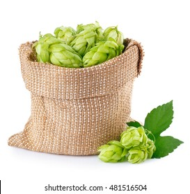 Fresh green hops in burlap bag with branch near isolated on white background