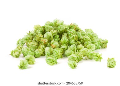 Fresh green hops, isolated on white background