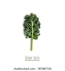 Fresh Green Kale Leaf on white background.  Concept for healthy nutrition. Top view. Copy space.