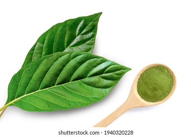 Fresh green Kratom leaf ( Mitragyna speciosa ) with kratom powder in wooden spoon isolated on white background. Top view. Flat lay.