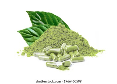 Fresh green Kratom leaves (Mitragyna speciosa) with pile of dry plant and natural herbal medicine powder capsule isolated on white background.