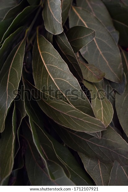 Fresh green laurel leaves with yellow ribs. Image for gastronomy background
