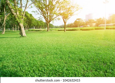 A fresh green lawn in the park, trees on the left and right, field of cosmos on background in morning sunlight