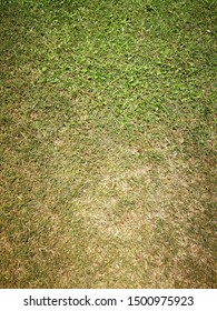 Fresh green lawns with dry grass in the park.