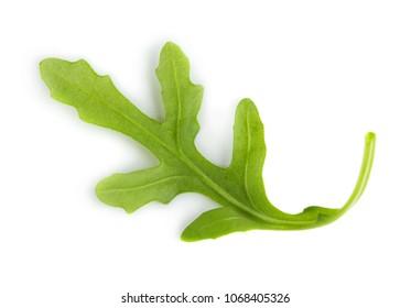 Fresh green leaf of arugula isolated on white background