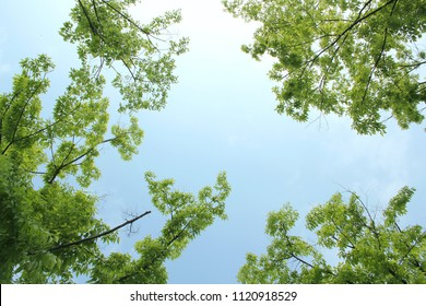 fresh green leaf and branch on blue sky