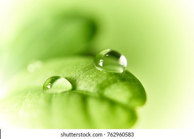 Fresh green leaf with dew drops close up bright background