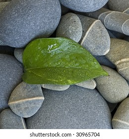 fresh green leaf and gray pebble