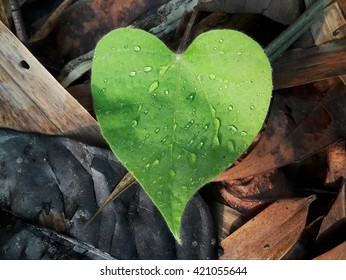 fresh green leaf heart background