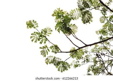 Fresh green leaf isolated on white background.