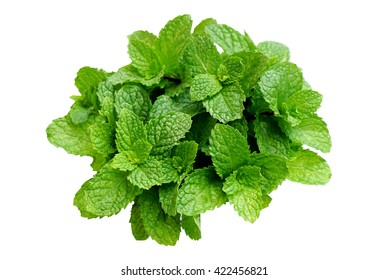 fresh green leaf mint isolated on a white background with copy space for text
