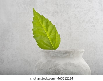 Fresh green leaf in old vase, symbol of environment and new life. Still life and concept image of eco awareness, nature, beginnings, growth and ecology.