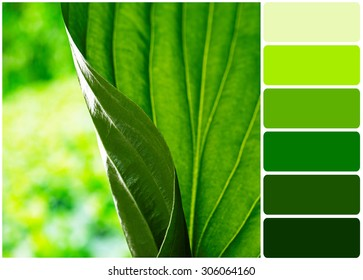 Fresh green leaf and palette of colors