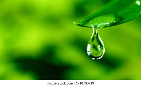 fresh green leaf with water drop, relaxation nature concept