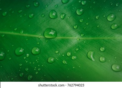 Fresh green  leaf with water drop.  Green background.