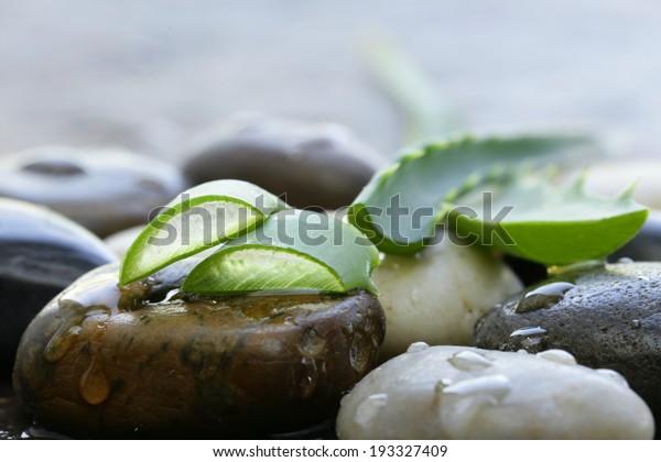 Fresh green leaves of aloe vera plant